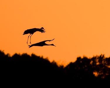 Cranes-18