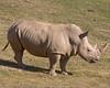 Rhino at San Diego Wild Animal Park, January 2009