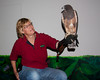 The Swainson's Hawk here was saved from extraordinary heat after a late hatching near Boise, Idaho and raised from a chick by this trainer. This photos shows the relative size of her trainer and herself. This animal is caged at the World Center for Birds of Prey in Boise, Idaho.