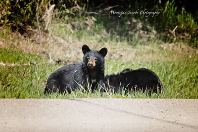 Bears_052817_9959 web