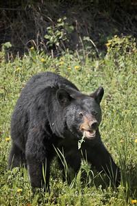 Bears_052817_9936 web