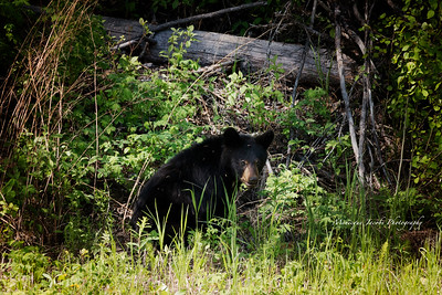 Bears_052817_9870 web