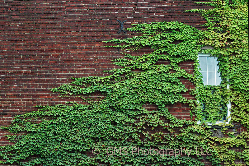 Ivy partially covers wall and window in Red Bank NJ.