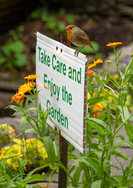 Take Care and Enjoy the Garden