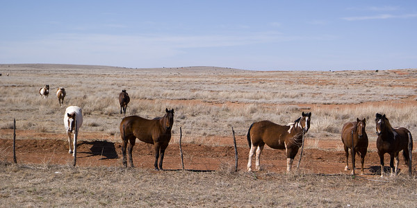Horses W TX US-82
