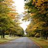 Scottland Tree-LIned Road