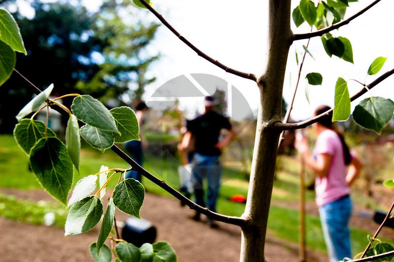 Planting Trees in Kamloops