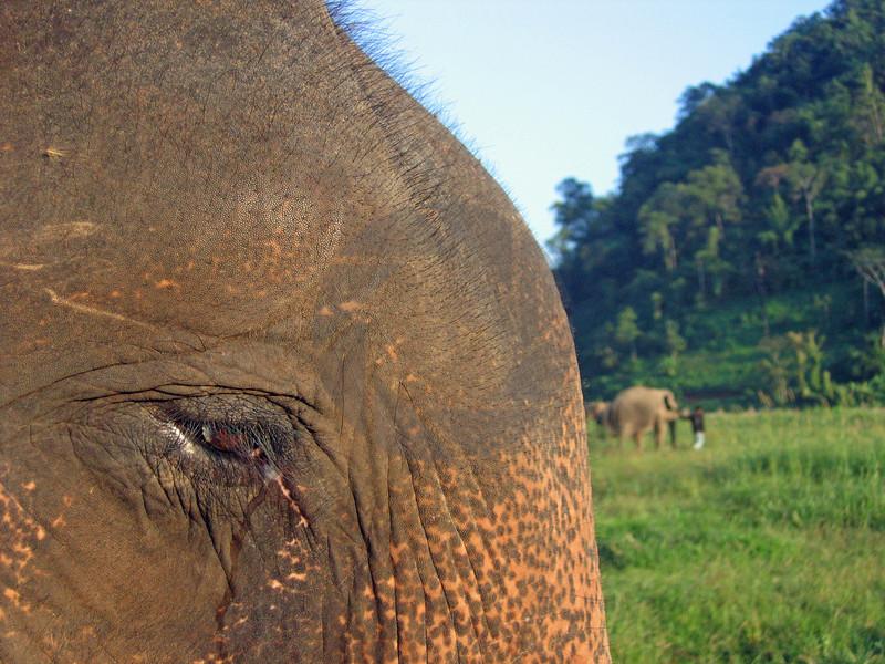 Elephant Sadness