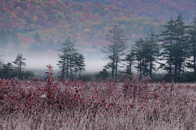 Cranberry Glades Monongahela National Forrest