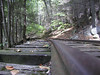 Old Logging Railroad<br /> Yankee Horse Ridge<br /> Blue Ridge Parkway<br /> Elev. 3140