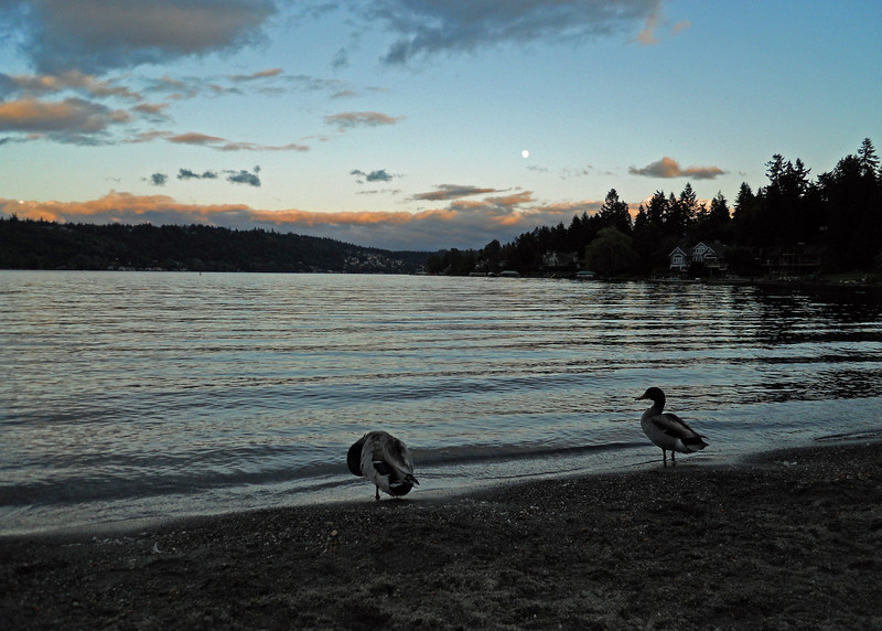 Lake Sammamish Washington