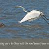 Processed Egret