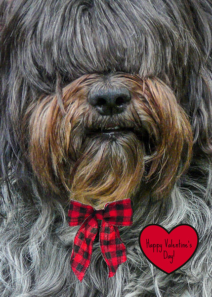 """<a href=""""https://www.greetingcarduniverse.com/holiday-cards/valentines-day-cards/animals-pets/dogs/happy-valentines-day-sheepdog-1225830?aid=253730"""">https://www.greetingcarduniverse.com/holiday-cards/valentines-day-cards/animals-pets/dogs/happy-valentines-day-sheepdog-1225830?aid=253730</a>"""