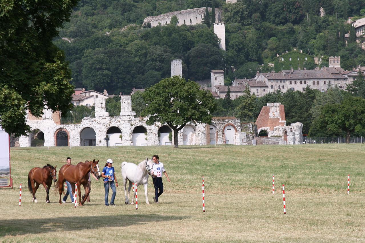 40.  0032 jpg horses in front of ruins