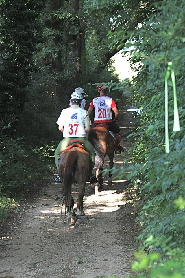 3.  462  Trail scene