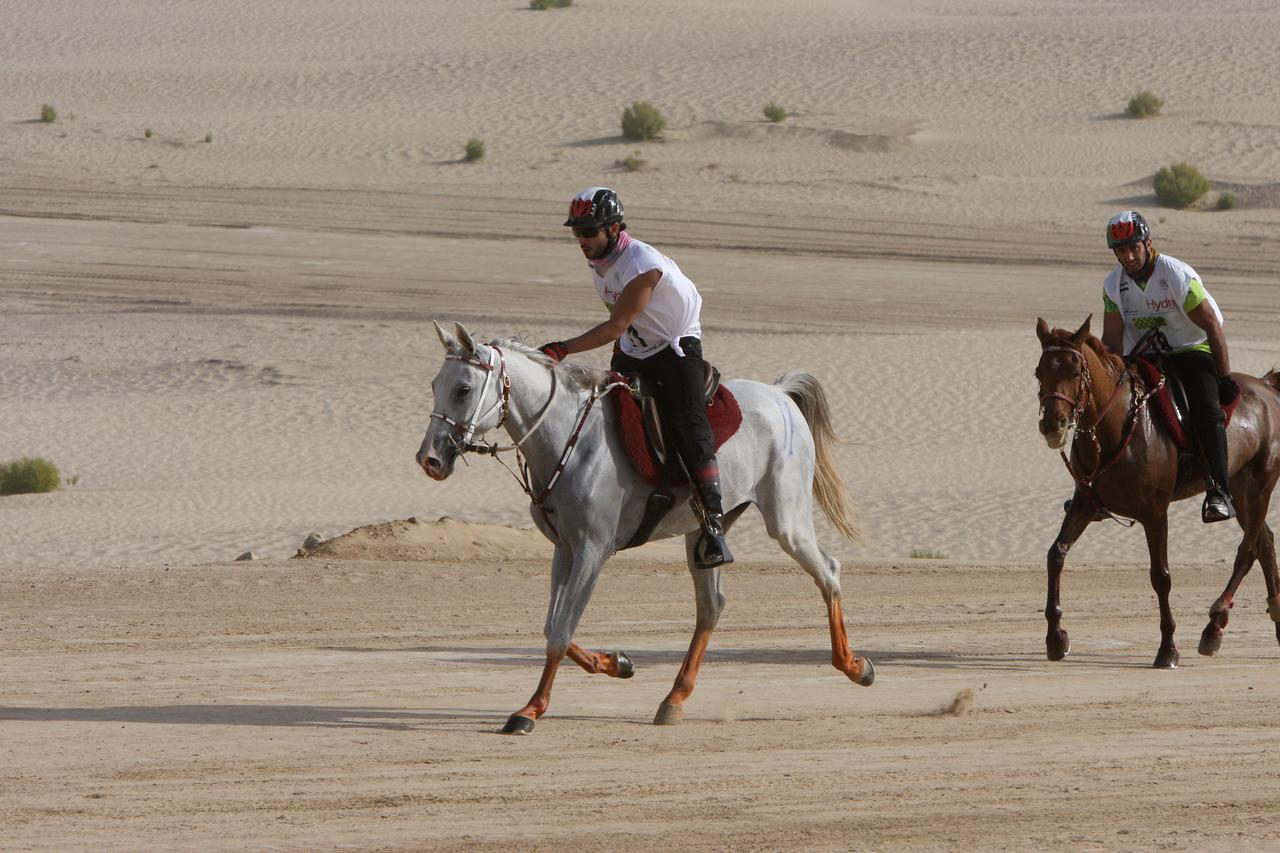 Front rider, #11, Sh Hazza bin Sultan Al Nahyan on Nadja Lotoise