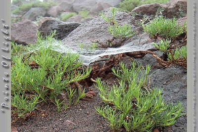 "A light mist during a Sunrise can really add a dimension to the play of light... but a heavy mist while hiking in the mountains means that you get to pay attention to the little things near the ground!  Things such as these 3"" tall plants and their dew encrusted web on Mount Shasta in California."