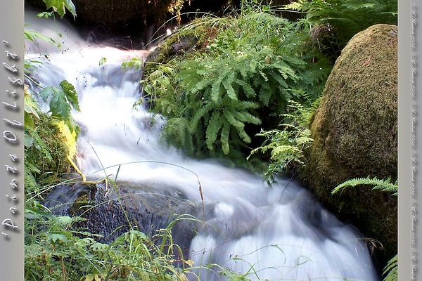 Water from Shasta Springs, California... originally used as the water in Shasta Soda Pop!  No kidding.  Here it's just rushing down through the forest, keeping the ferns and mosses happy.
