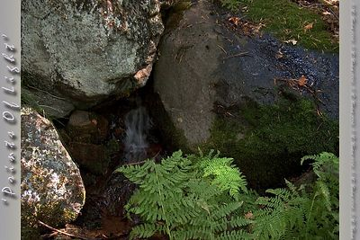 A tiny, almost hidden spring in the woods near Shasta Springs, California.