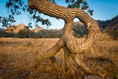 JD_MalibuCreekSP_140823_0052-Edit-1