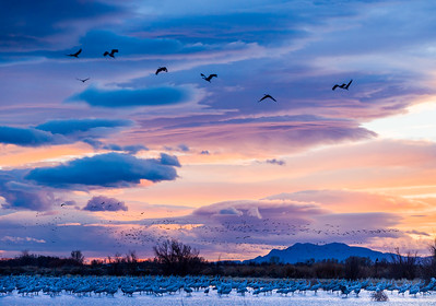 Clearing Storm and Sandhill Cranes near Bosque del Apache, NM
