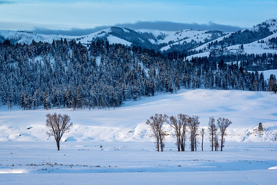 JD_Yellowstone_180124_0052