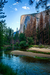 The morning sun strikes El Capitan in Yosemite Valley.  I expect that the dead trees on the opposite bank will be cut down soon, as much of the deadwood on the south side has been already.  It will be interesting to see how different this spot looks in 2018.