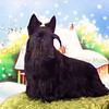 """Greg Maniscalco, SuEt's Street of Dreams, the Scottish Terrier in studio January 2015.  """"The Lost Files"""". Owned by Sueannette Maniscalco."""