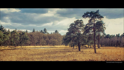 Hoge Veluwe National Park Holland