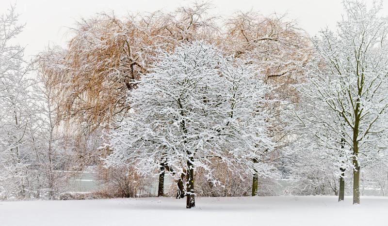 Iced-Trees
