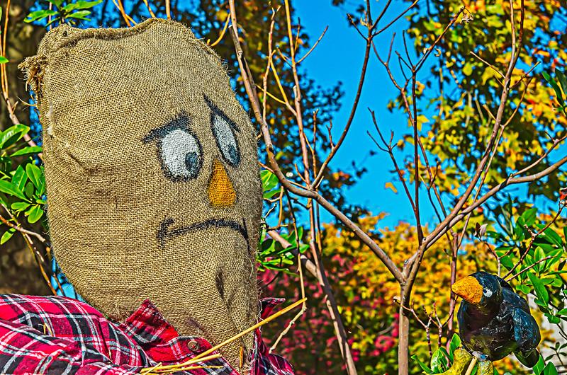 Scarecrow, Black Bird