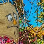 Scarecrow, Blackbird, Diologt