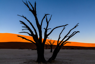 Moonset and Sunrise in the Dead Vlei