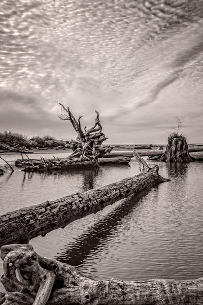 Bones of the Coastal Giants