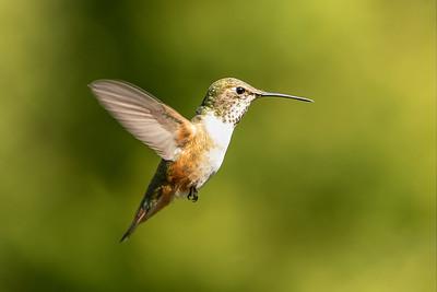 Hummingbird 5.0
