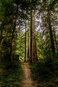 To the Big Tree
