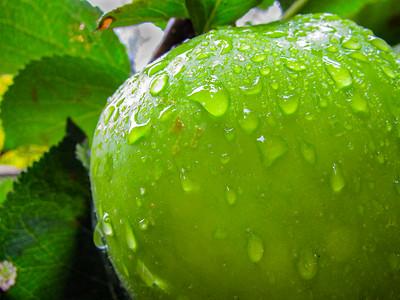 Bramley Rains