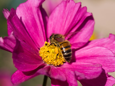Purple and Bee