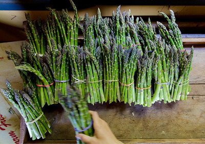Bunches of asparagus are sorted to be sold at Oley Valley Organics farm May 24, 2017.