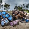Oceania Botanica - Carla Gottgens