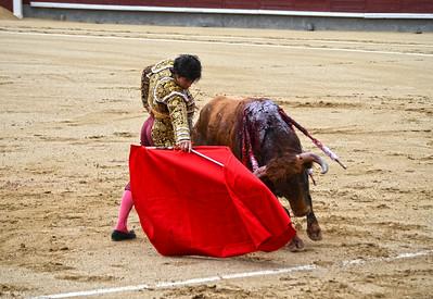 Miguel Maestro (Novillero -- Novice) Brings The Bull in Close