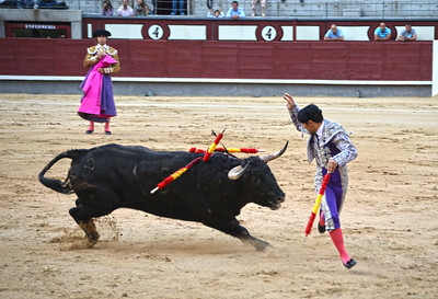 The Banderillero Adds Two More Banderillas to the Bull's Shoulders