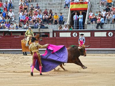 Miguel Maestro (Novillero -- Novice) Passes the Bull
