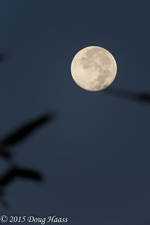 Full moon at sunrise with Wood Storks flying in front of it when I shot.
