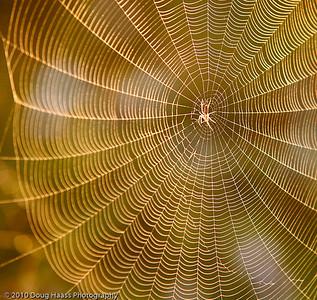 Spider Web on Old Horseshoe Lake