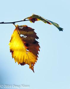 Changing Season...Fall on Spillway Trail