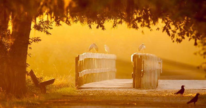 Sunrise - Golden rays of sunlight at Spillway Bridge