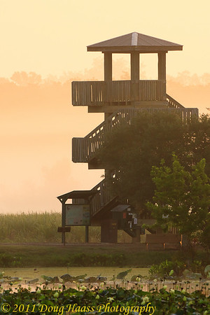 Foggy morning at Observation Tower on 40 Acre Lake
