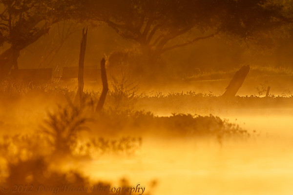 Shooting across 40 Acre Lake at sunrise on foggy morning