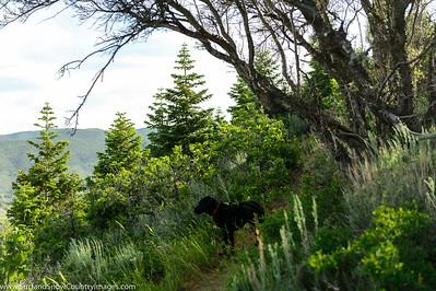 ScottHallenbergPhotography 20150621d4 0001c1--DSC_0001